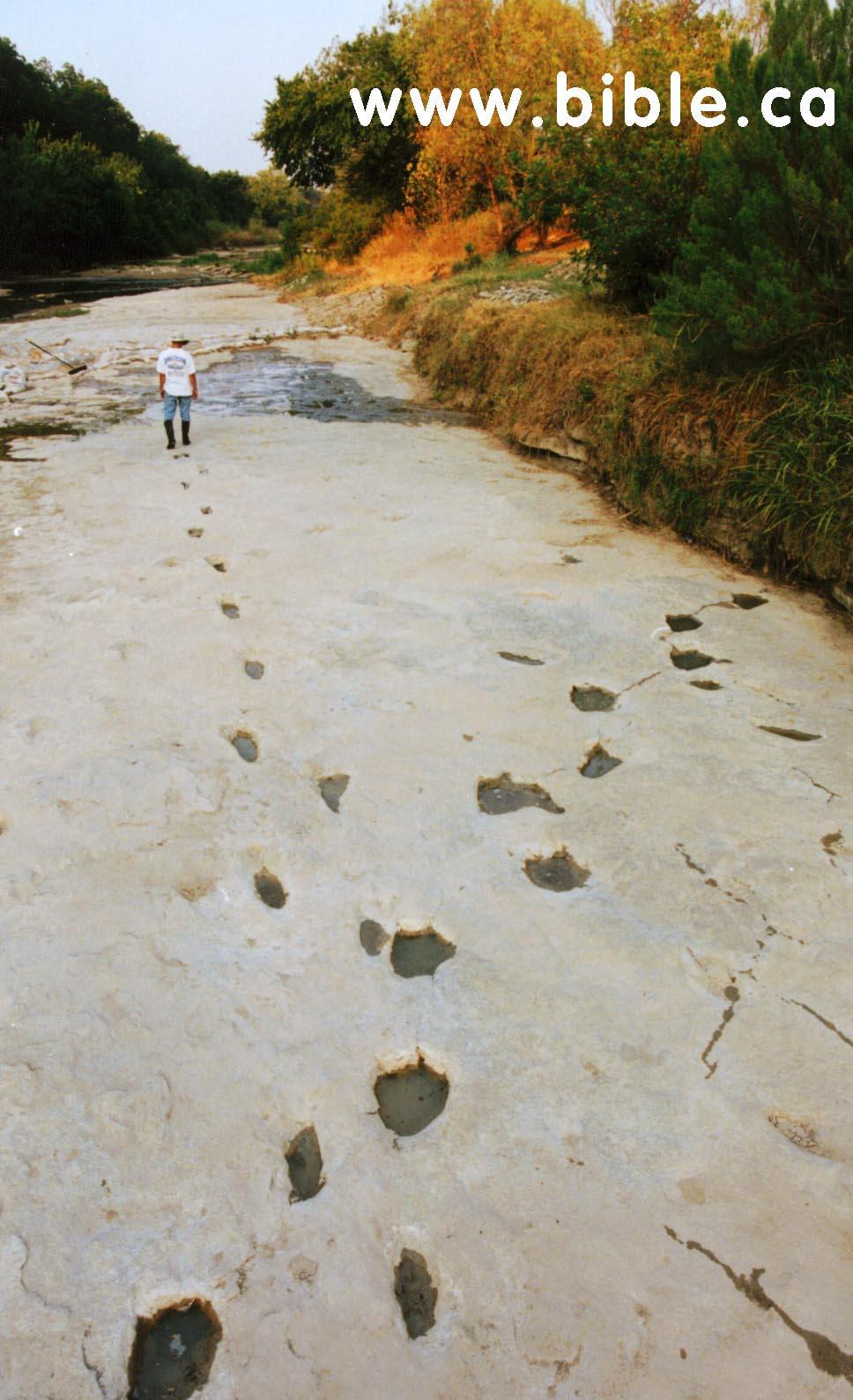 The Cretaceous Limestone block contains a human footprint ...  |Paluxy Evidence